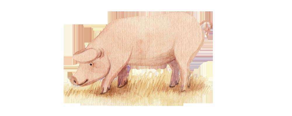 cerdo al tamaño